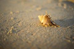 Shell em sand3 Imagem de Stock Royalty Free