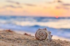 Shell em Sandy Beach tropical com nascer do sol sobre o oceano como um CCB Imagens de Stock Royalty Free