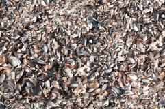 Shell em terra nas ondas do mar no por do sol foto de stock royalty free