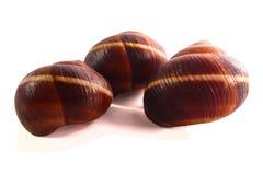 Shell em um fundo branco, da hélice do pomatia caracol romano igualmente, caracol de Borgonha, caracol comestível ou escargot, é  fotografia de stock royalty free