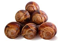 Shell em um fundo branco, da hélice do pomatia caracol romano igualmente, caracol de Borgonha, caracol comestível ou escargot, é  fotos de stock