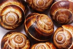 Shell em um fundo branco, da h?lice do pomatia caracol romano igualmente, caracol de Borgonha, caracol comest?vel ou escargot, ?  imagens de stock