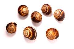 Shell em um fundo branco, pomatia da hélice, caracol de Borgonha, caracol comestível ou escargot, é uma espécie de grande, comest imagens de stock royalty free