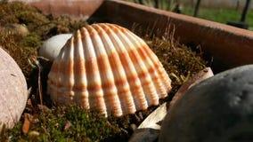 Shell em um potenciômetro de flor Imagens de Stock Royalty Free