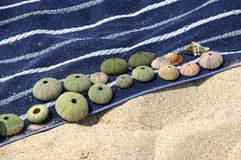 Shell em uma toalha de praia imagem de stock royalty free