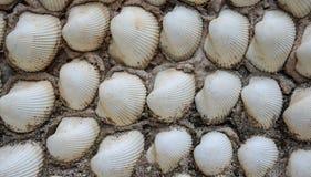 Shell empareda, textura del fondo Imagenes de archivo