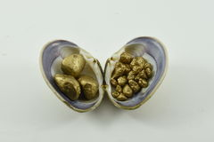 Shell. Empty shell with pebbles decorative golden Royalty Free Stock Images
