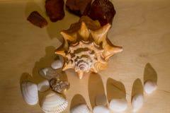 Shell en amber Stock Afbeelding
