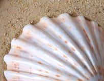Shell en arena Fotos de archivo