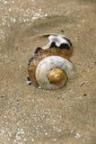 Shell en arena Imagen de archivo