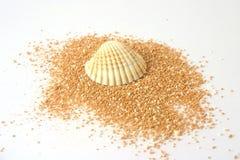 Shell en beachsand Imagen de archivo libre de regalías