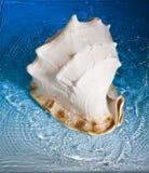 Shell en blauw water Stock Afbeeldingen
