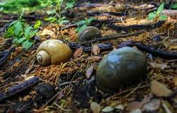 Shell en campo tropical Fotos de archivo