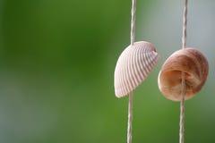 Shell en de onduidelijk beeldachtergrond Stock Fotografie