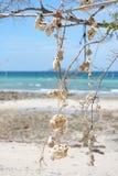 Shell en el árbol Imagen de archivo