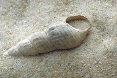 Shell en la arena. Fotografía de archivo libre de regalías