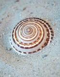Shell en la arena Fotos de archivo libres de regalías