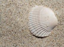 Shell en la arena imágenes de archivo libres de regalías