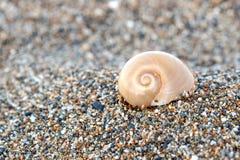 Shell en la arena Imagen de archivo