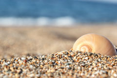 Shell en la arena Foto de archivo