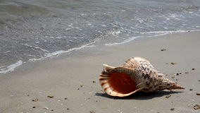 Shell en la arena en la playa almacen de video