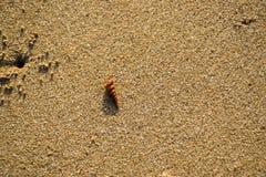 Shell en la arena en una playa imagenes de archivo