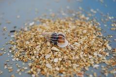 Shell en la grava marrón clara imagen de archivo libre de regalías