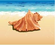 Shell en la playa Fotografía de archivo libre de regalías