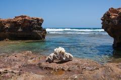 Shell en la playa Imagen de archivo