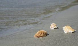Shell en la playa Foto de archivo libre de regalías