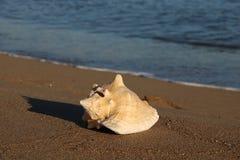 Shell en la playa del santo Raphael Frejus VAR Francia Foto de archivo libre de regalías