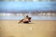 Shell en la playa enarena la agua de mar Imagenes de archivo