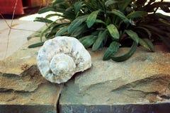 Shell en la repisa de piedra fotos de archivo