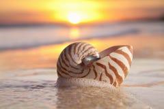 Shell en la salida del sol de la onda del mar, luz caliente del nautilus Imagenes de archivo