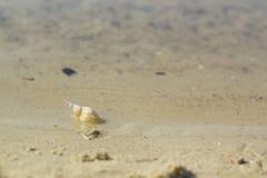 Shell en sable au bord des eaux photographie stock libre de droits