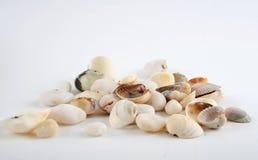 Shell en steen Royalty-vrije Stock Afbeeldingen