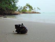 Shell en una playa Imagenes de archivo