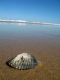 Shell-Entdeckung Stockbild