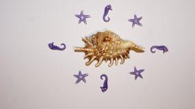 Shell a entouré par les hors es de mer et les étoiles images libres de droits