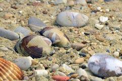 Shell entre seixos Fotos de Stock