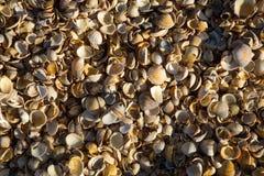 Shell escalona la playa fotos de archivo