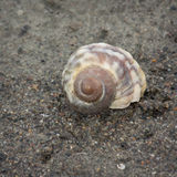 Shell espiral Foto de archivo