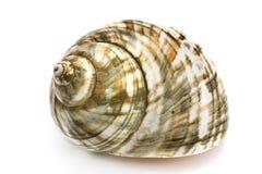 Shell espiral del mar Fotos de archivo libres de regalías