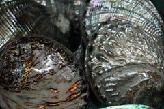 Shell et espèce marine à vendre dans un magasin photo stock