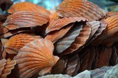 Shell et espèce marine à vendre dans un magasin images stock