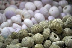 Shell et espèce marine à vendre dans un magasin photo libre de droits