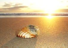 Shell et lever de soleil Photo libre de droits