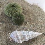Shell et oursin sur la plage sablonneuse photo libre de droits