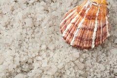Shell et sel de mer Photographie stock