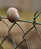 Shell on the fence Stock Images